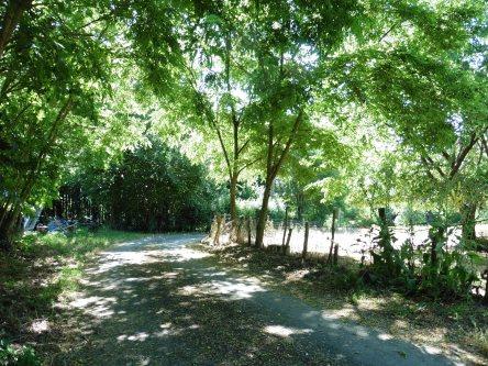 Le chalet vous attend au bout de cette allée ombragé par les acacias